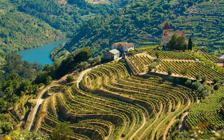 Weinberge am Fluss Douro © PhotoNeo / Shutterstock.com