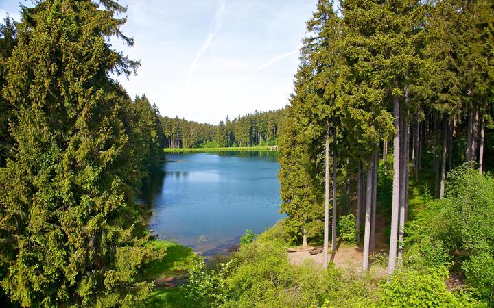See im Harz, umgeben von Wäldern © Gert Hochmuth / shutterstock.com