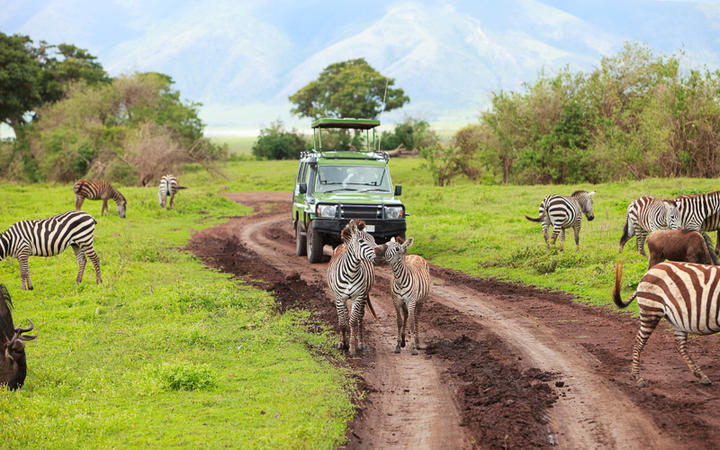 Safari im Ngorongoro-Krater, Naturschutzgebiet und Nationalpark am Rande der Serengeti © BlueOrange Studio / Shutterstock.com