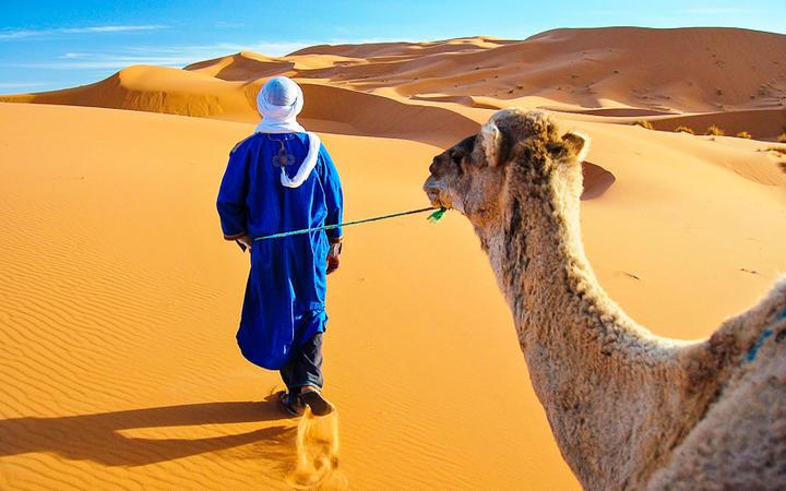 Berber mit einem Kamel in der Wüste von Marokko © Gigi Peis / Shutterstock.com