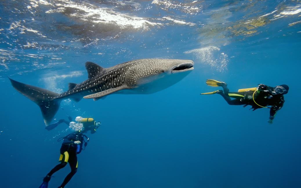 Unterwasserfotografen versuchen den Walhai vor die Linse zu bekommen © Krzysztof Odziomek / Shutterstock.com